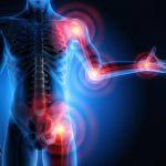 Ossa e muscolo: una combinazione vincente