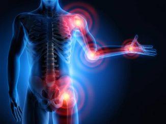 ossa e muscolo una combinazione vincente