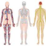 Osteopenia: cause, sintomi e cura